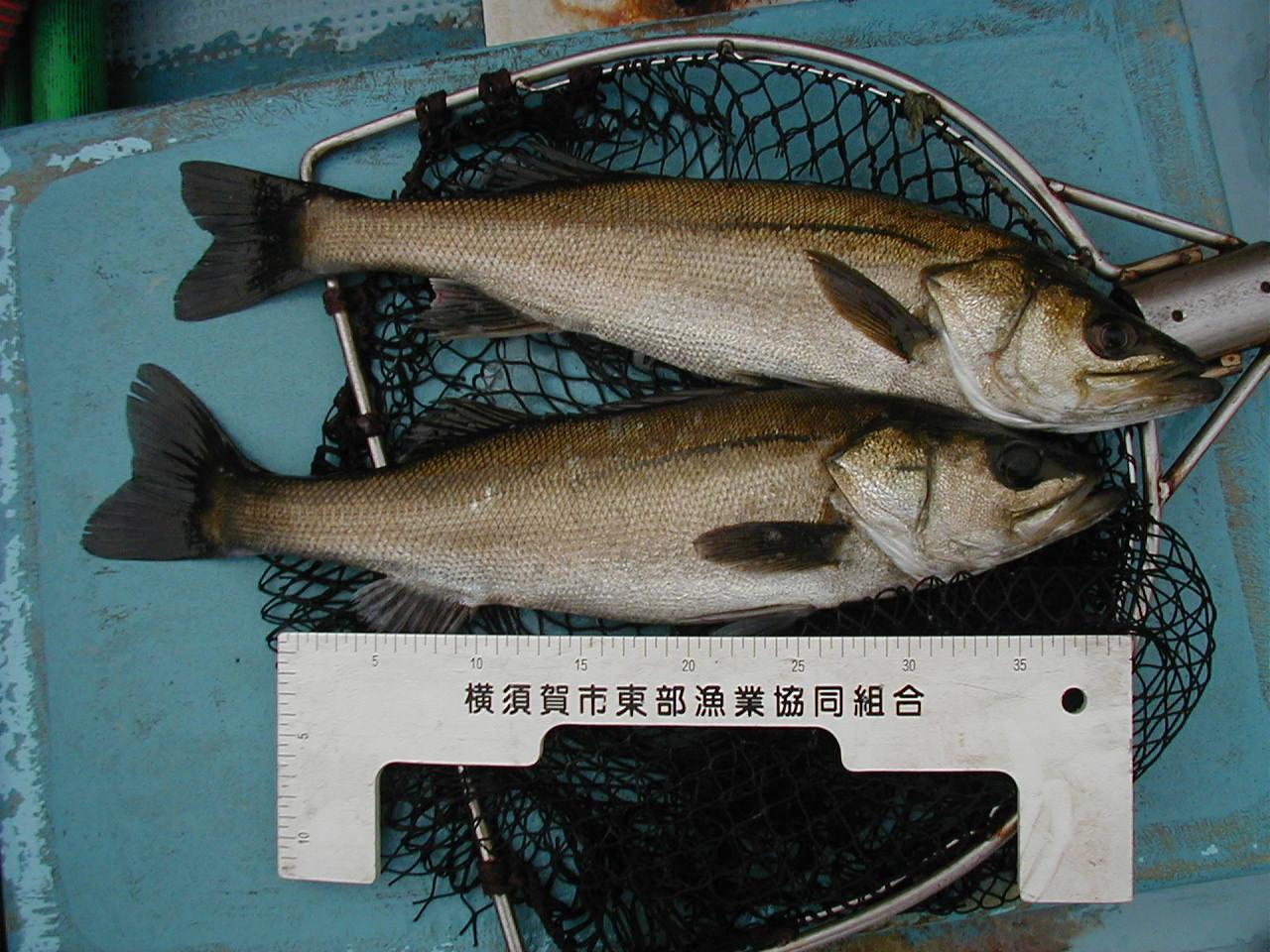 横須賀市東部漁協横須賀支所後継者グループ